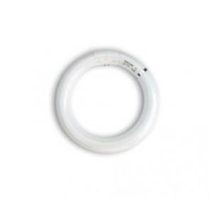 Insect-O-Cutor TGX22S Synergetic 22 Watt Circline Shatterproof Green UV Fly Killer Lamp